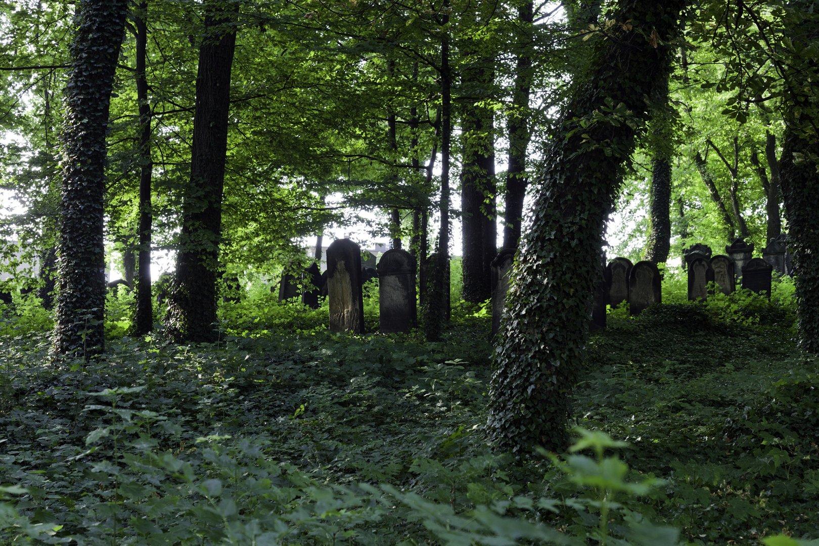 Cmentarz żydowski w Mikołowie - Silesia. Positve energy